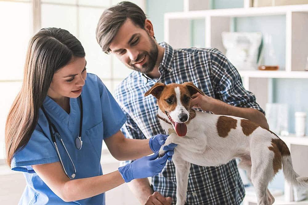seo para clinicas veterinarias